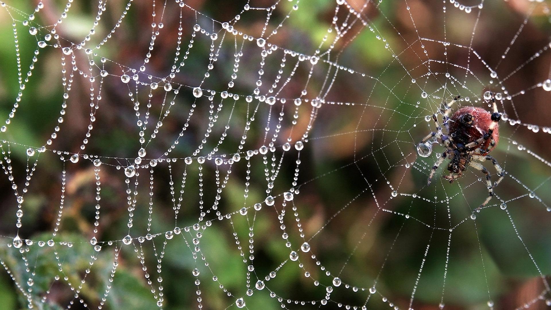 spider wallpaper background