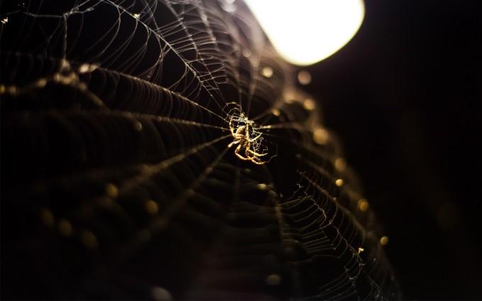 spider wallpaper tablet