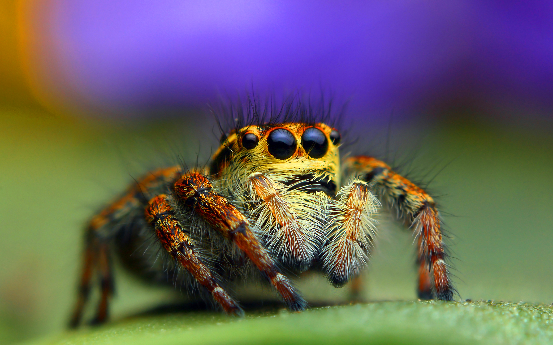 spider wallpapers 1080p