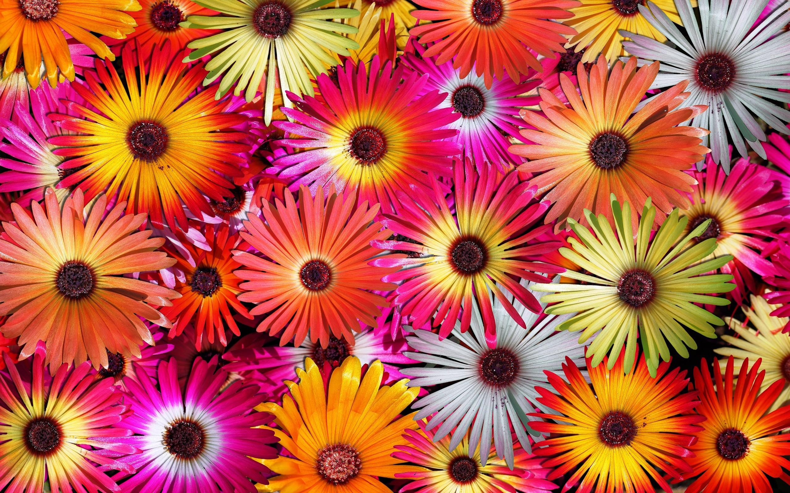 splendid flower