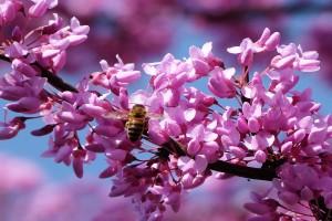 spring landscape desktop wallpaper