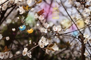 spring nature backgrounds