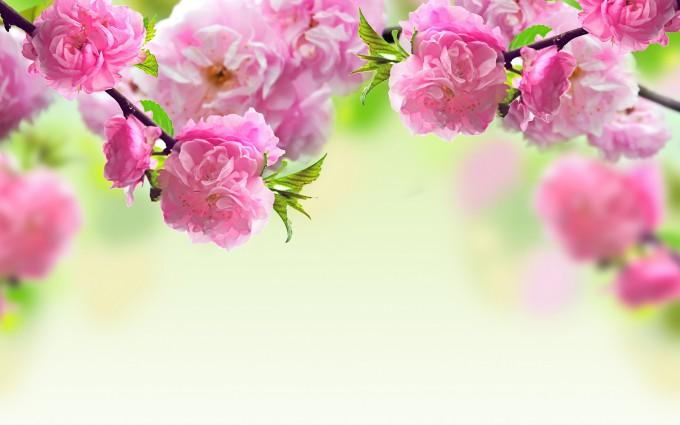 spring wallpaper desktop