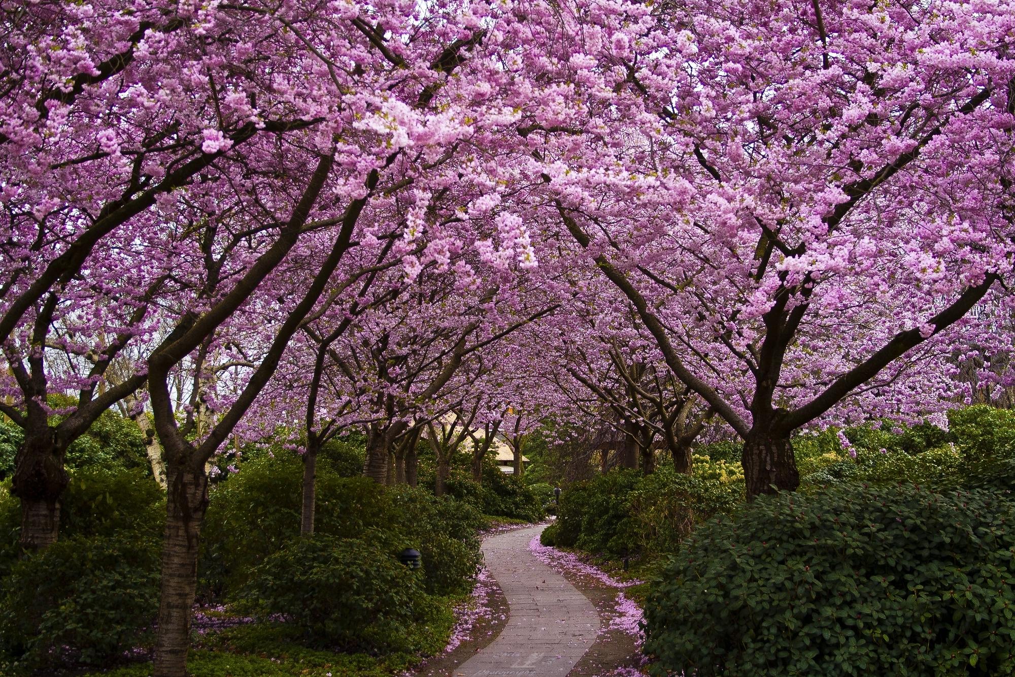 spring wallpaper purple