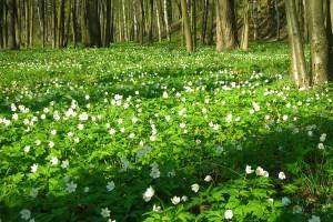 spring wallpaper white flowers