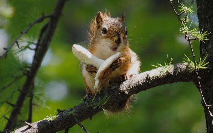 squirrel images free
