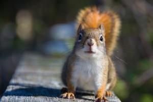 squirrel pictures free