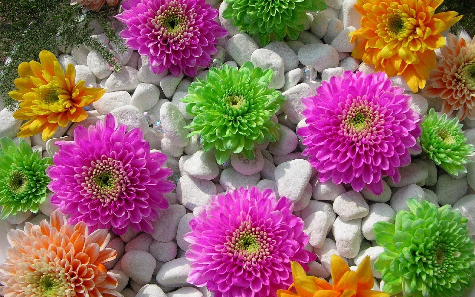 stone wallpaper flowers