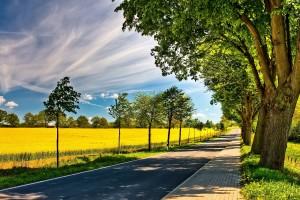 summer road field