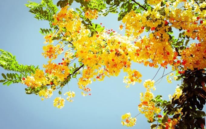 summer wallpaper flowers