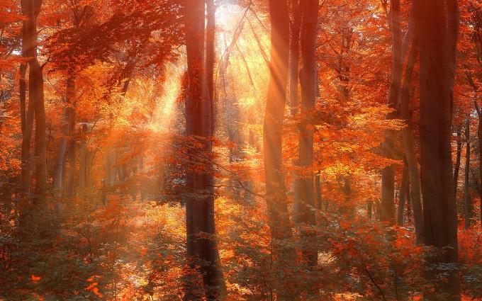 sun rays hd forest