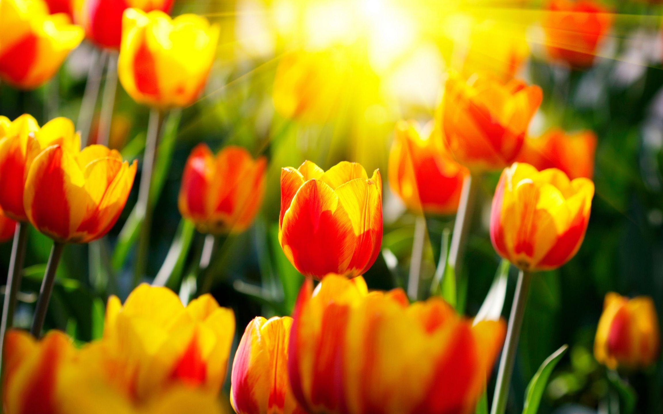 sunlight wallpaper flowers