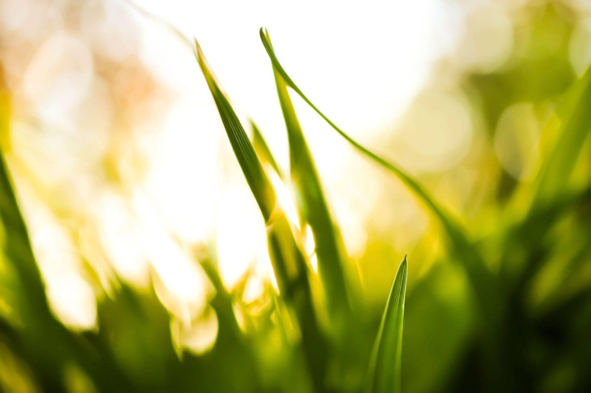 sunlight wallpaper grass