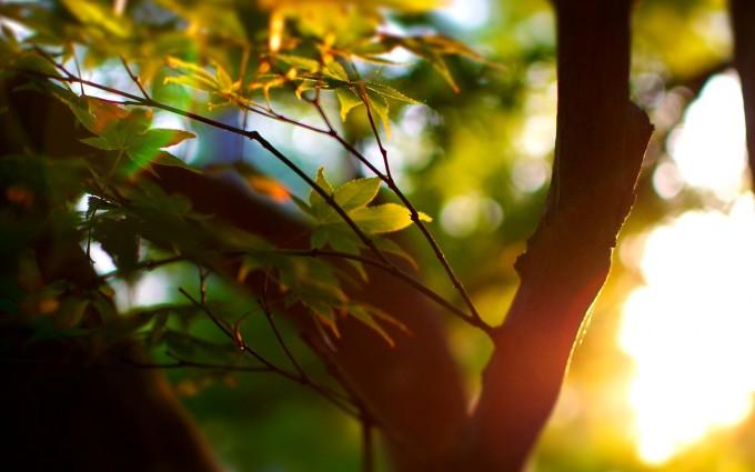sunlight wallpaper jungle