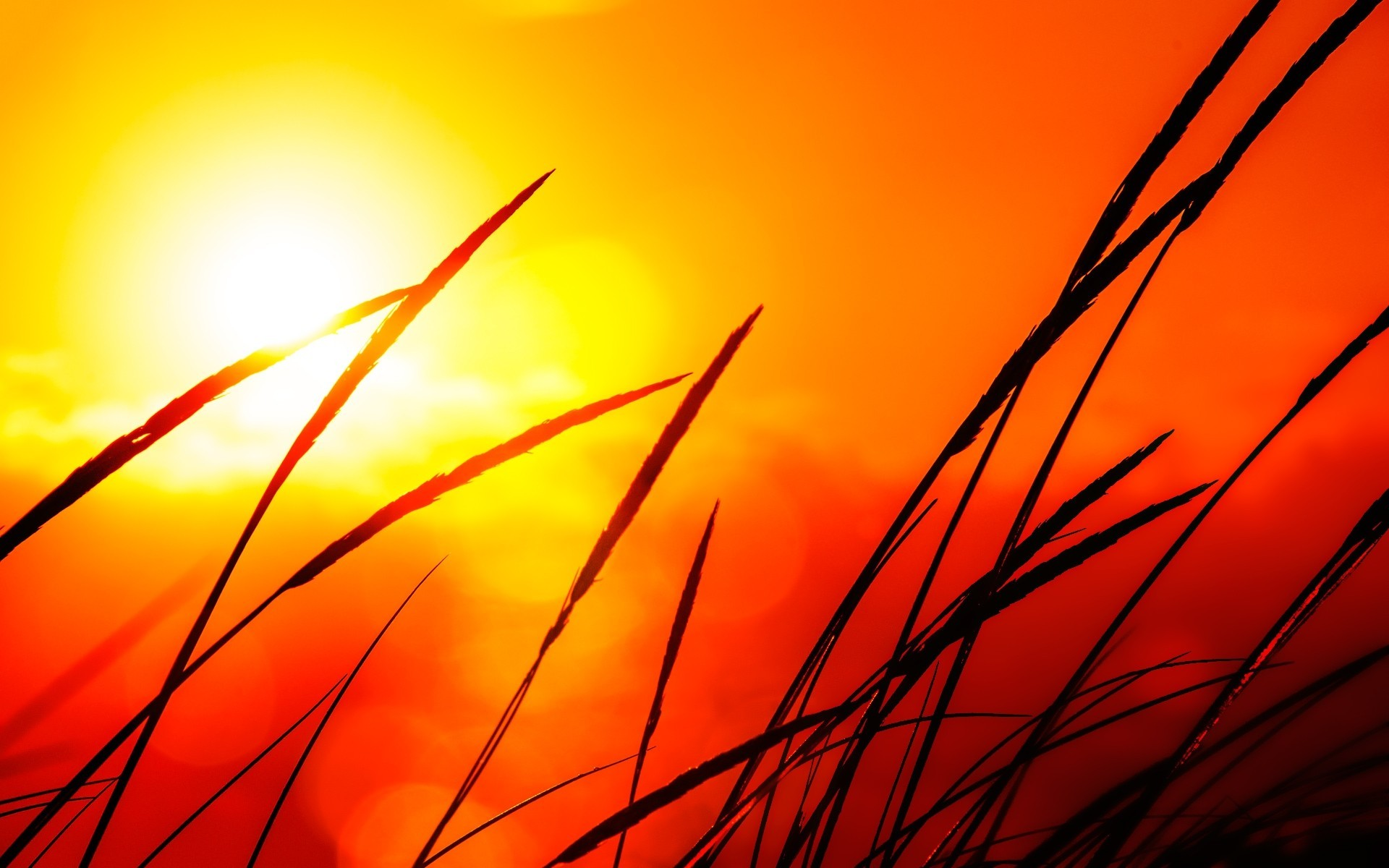 sunlight wallpaper orange red