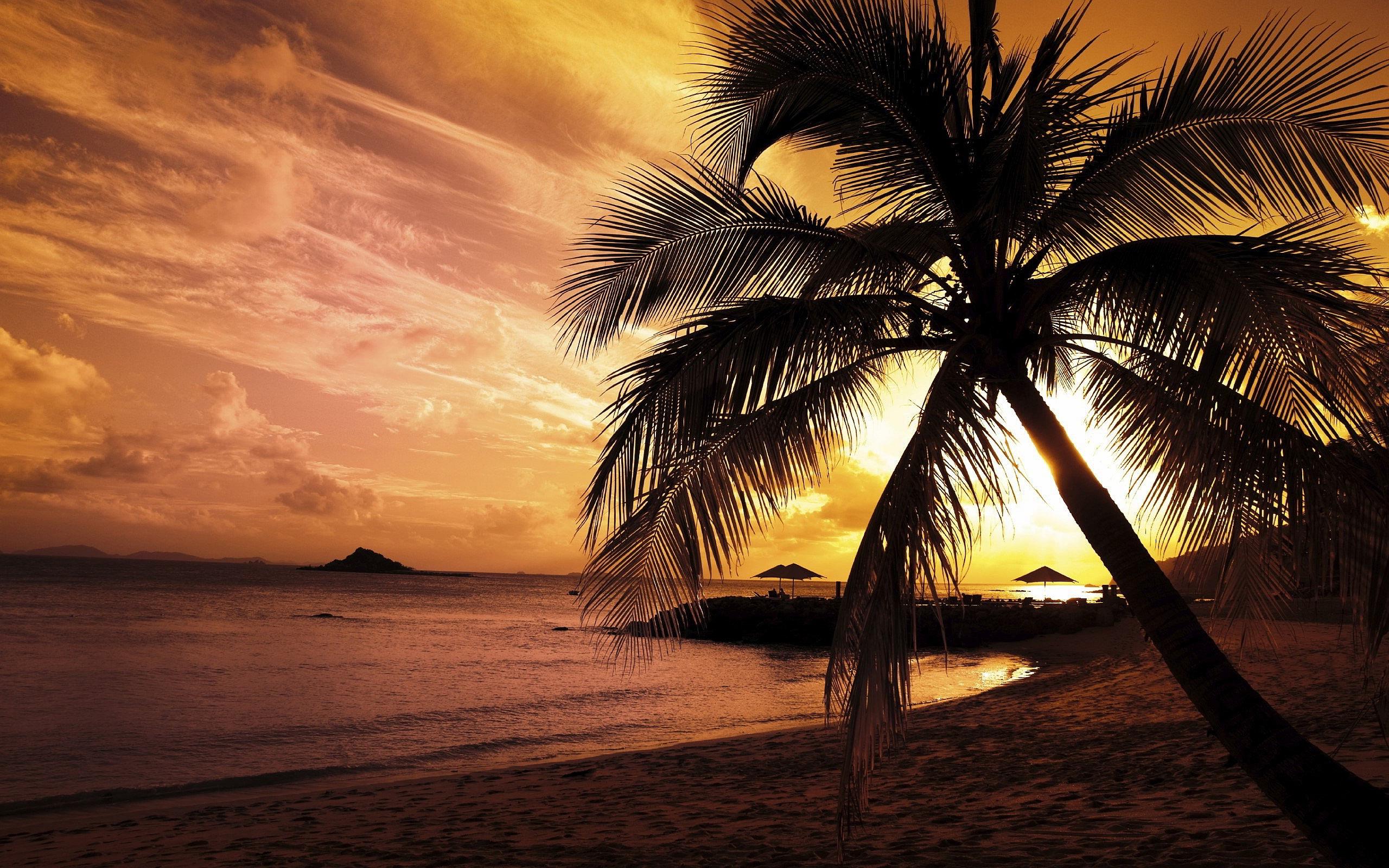 sunset images beach palm