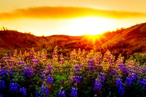 sunset images free download hd