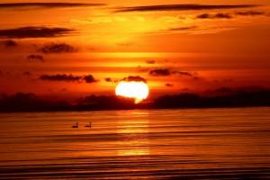 sunset images sea birds