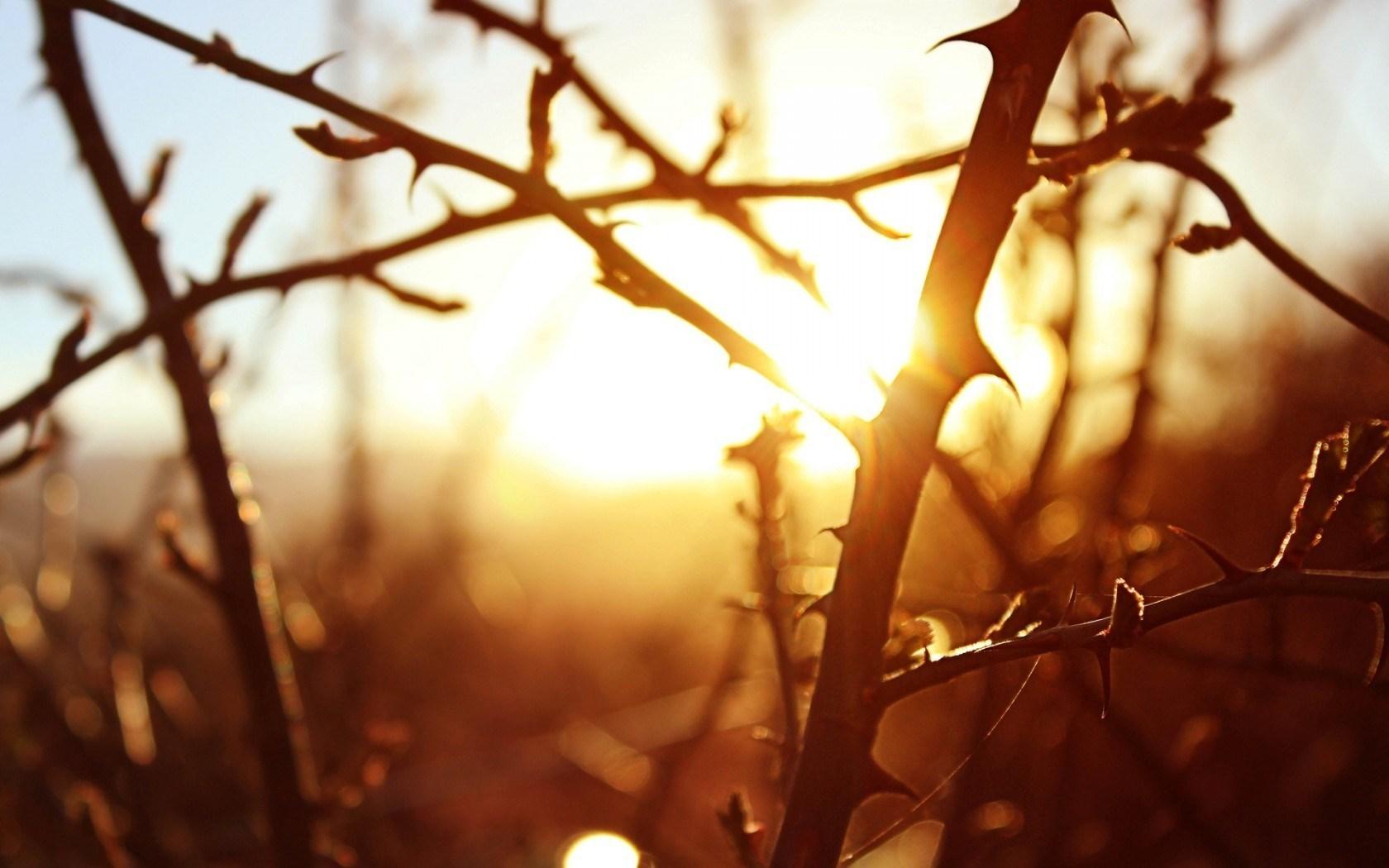 sunset images tree sunset