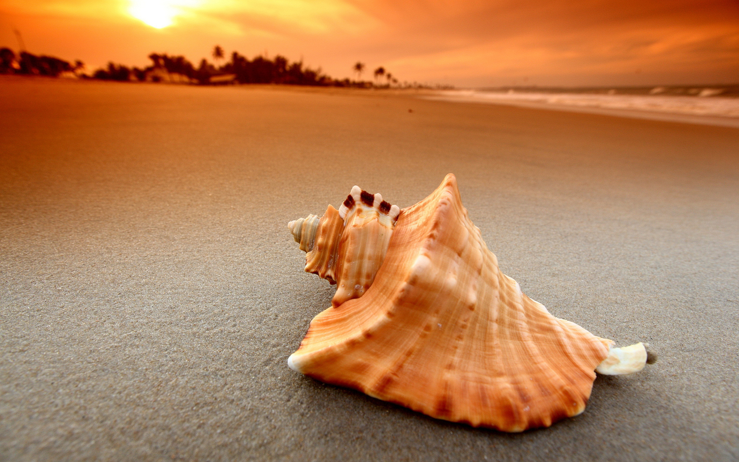sunset pictures seashell