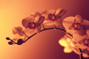 sunset wallpapers flowers