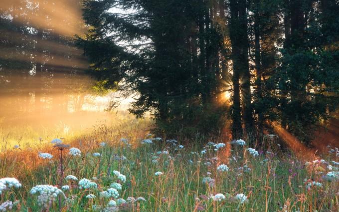 Misty summer meadows in bavaria