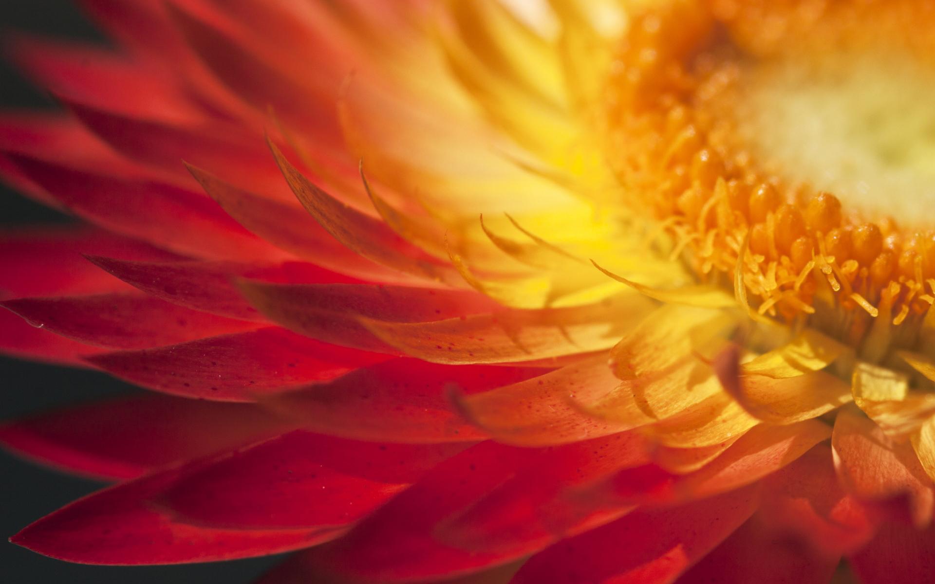 sunshine wallpaper petals