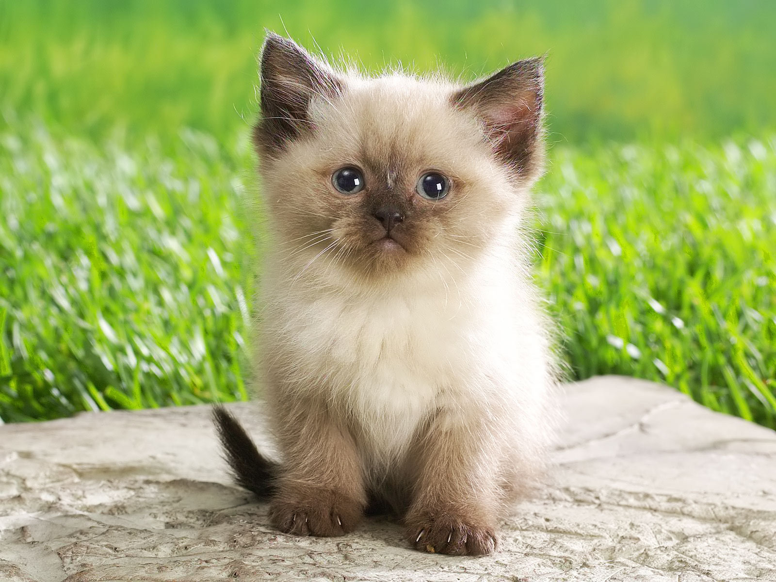 super cute animal pictures