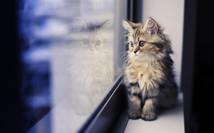 super cute animals pictures