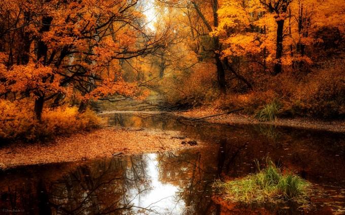 swamp wallpaper autumn fall