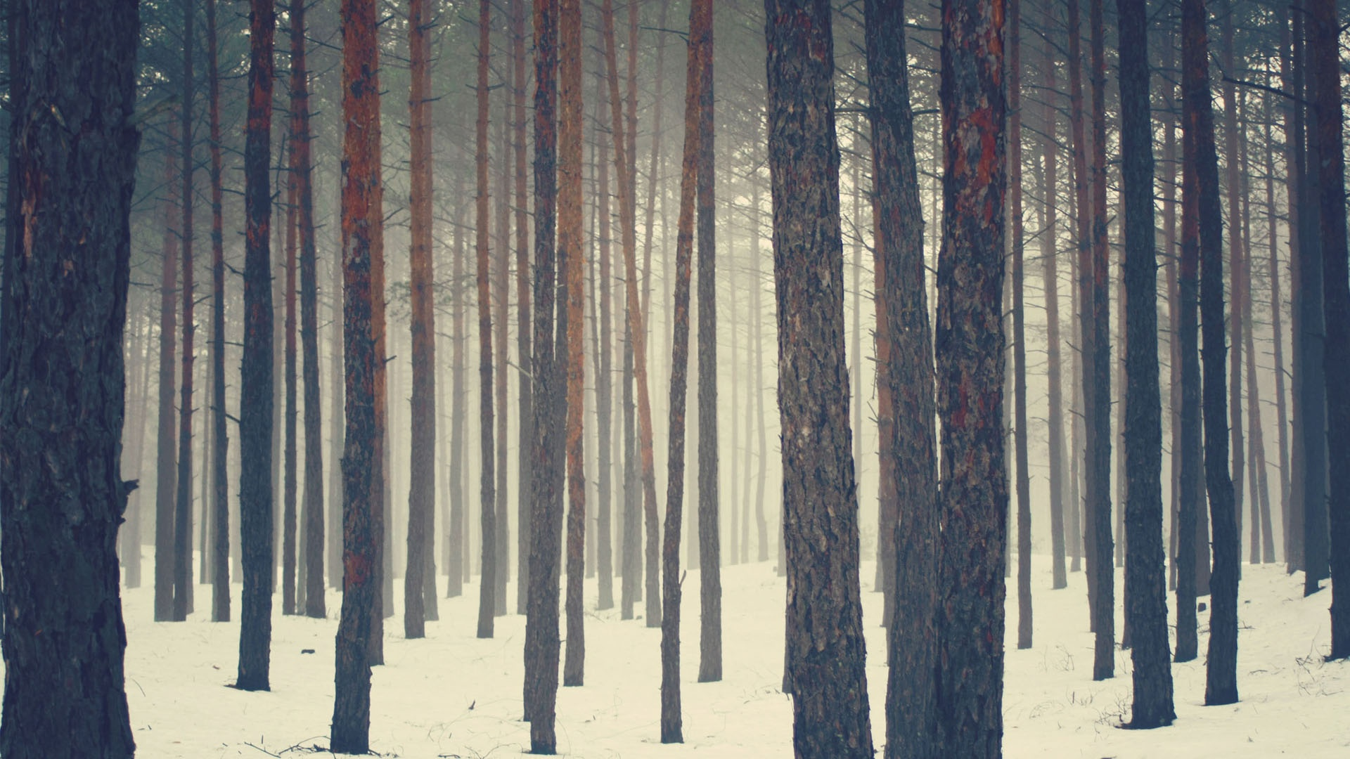 sweden wallpaper forest