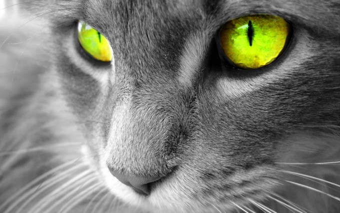 sweet cat pictures wallpapers