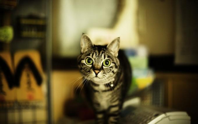 sweet cat wallpaper