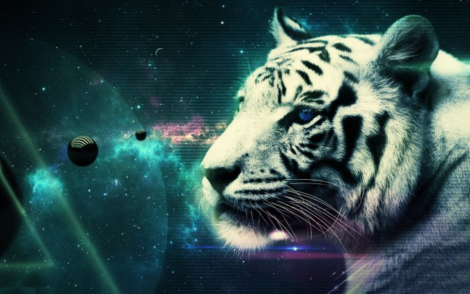 tiger background pictures
