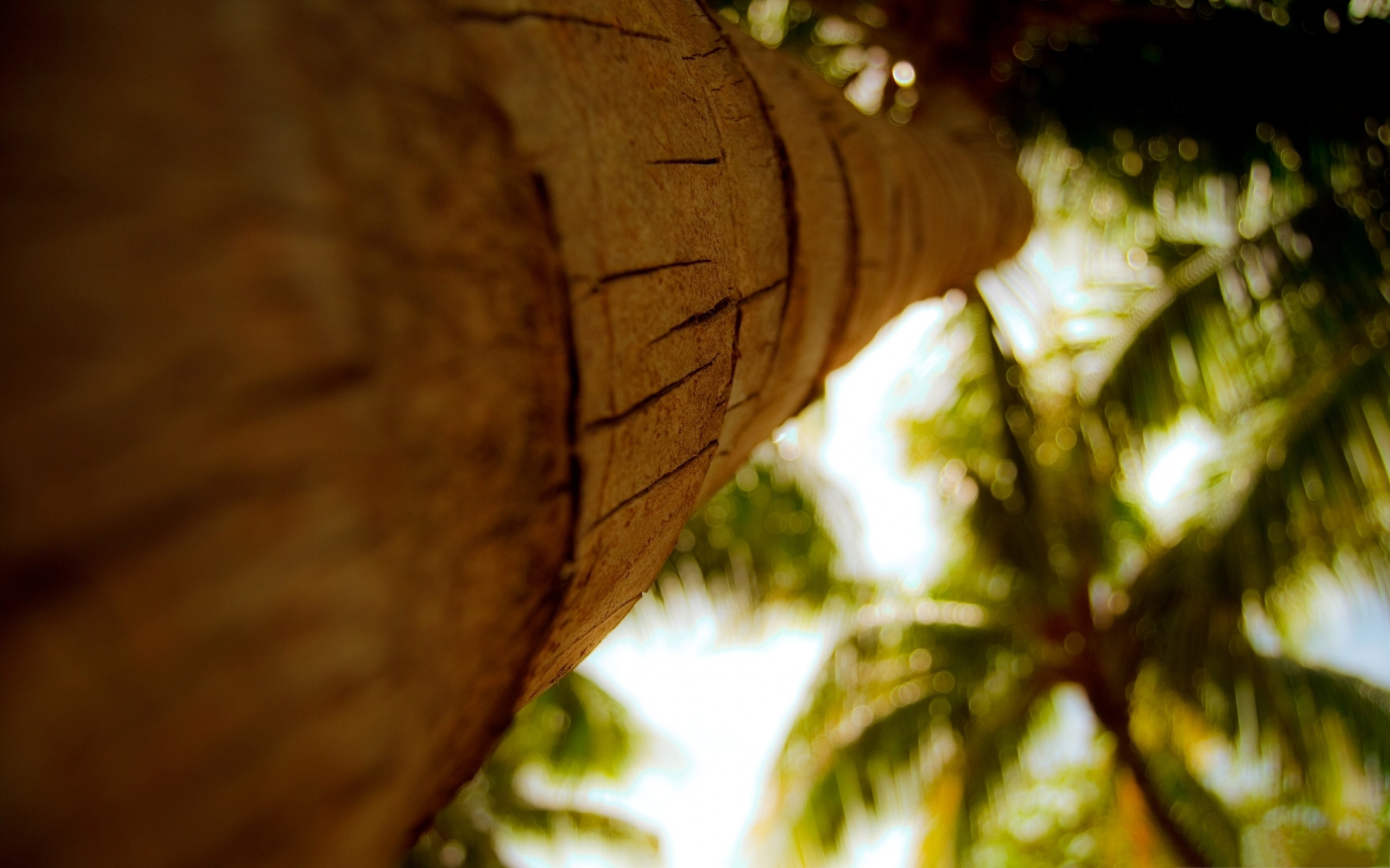 tree pictures palm