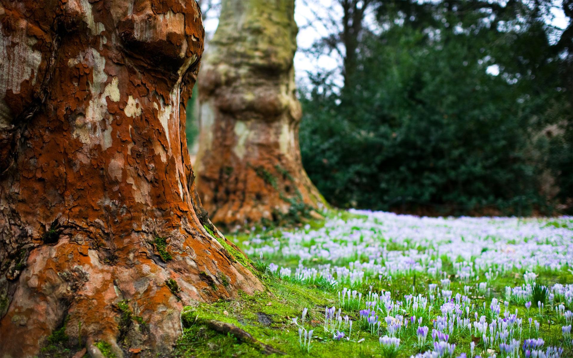 tree wallpaper earth