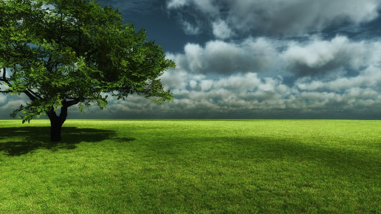 tree wallpaper landscape