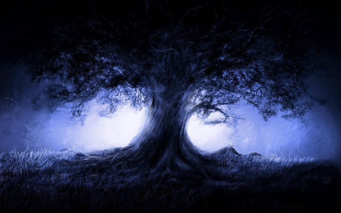 tree wallpaper night