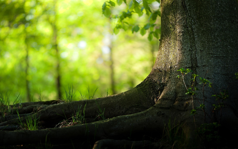 tree wallpaper summer