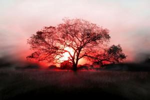 tree wallpaper sunrise