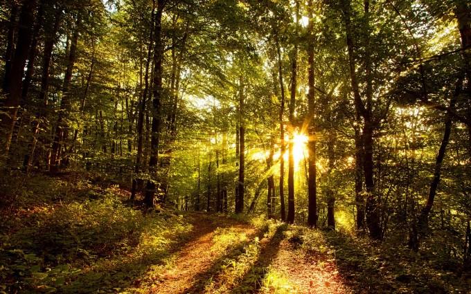 tree wallpaper sunset hd
