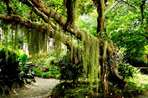 tropical forest A5 beautiful
