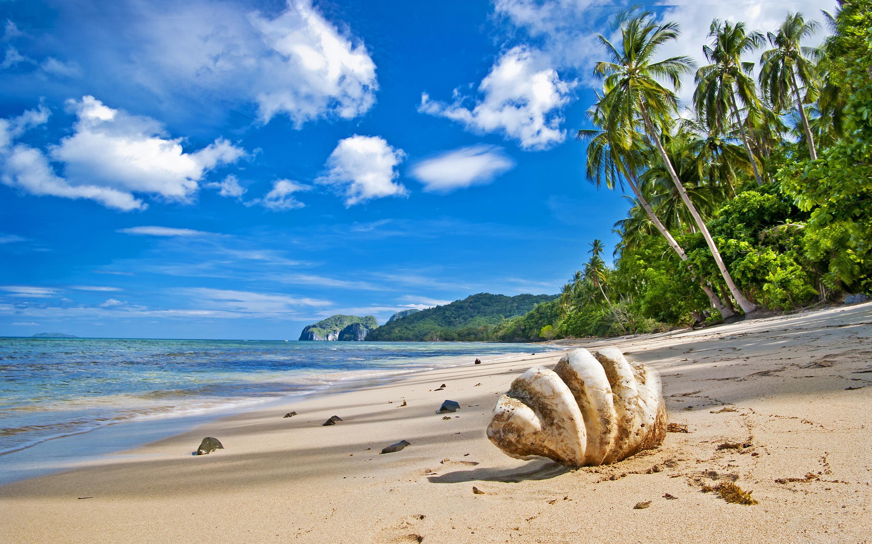 tropical palms beach - HD Desktop Wallpapers | 4k HD