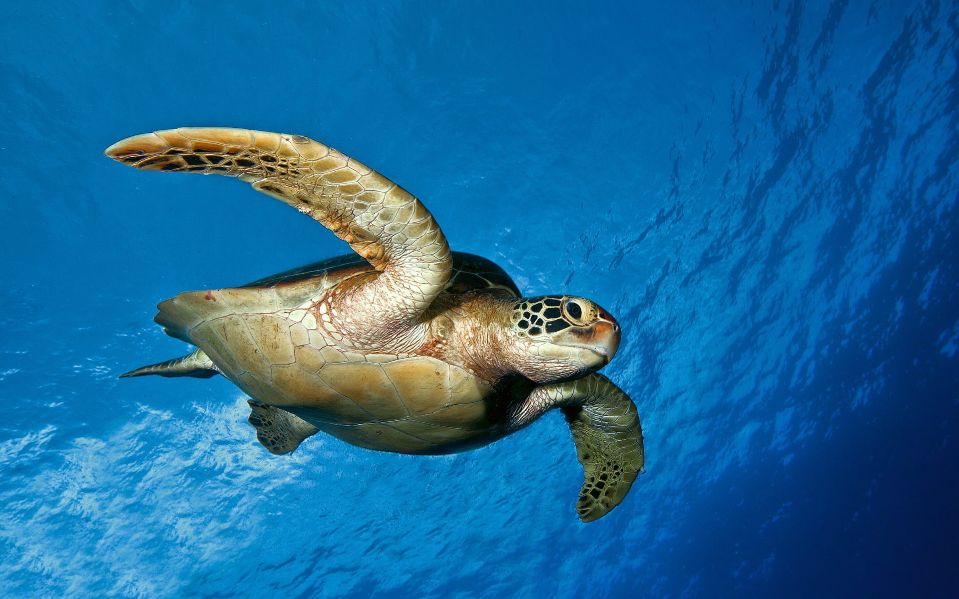 Turtle Close Up Face in Sea   HD Wallpapers