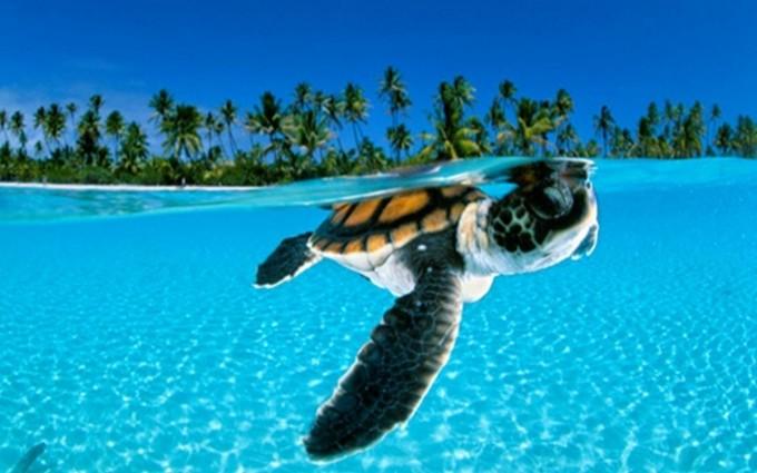 turtle cartoon wallpaper