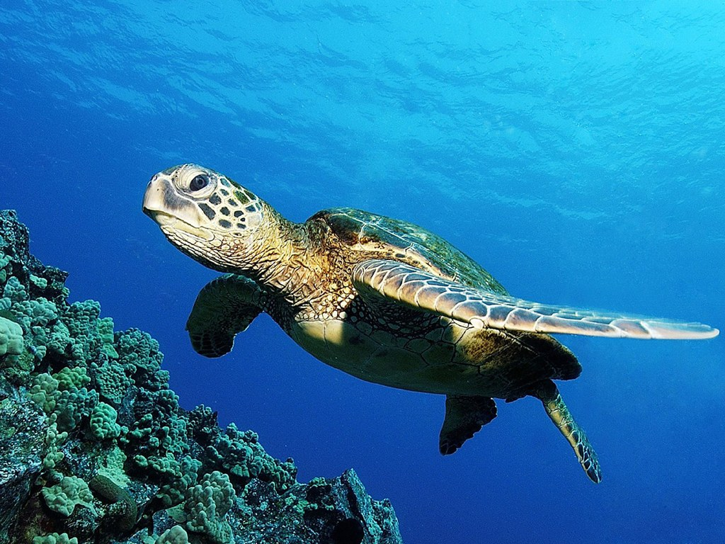 turtle images