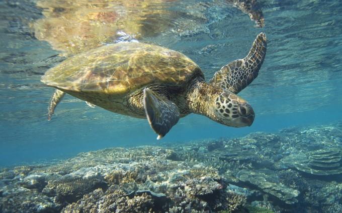 turtle screensaver