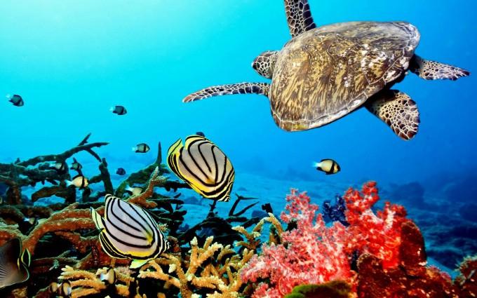 turtles hd