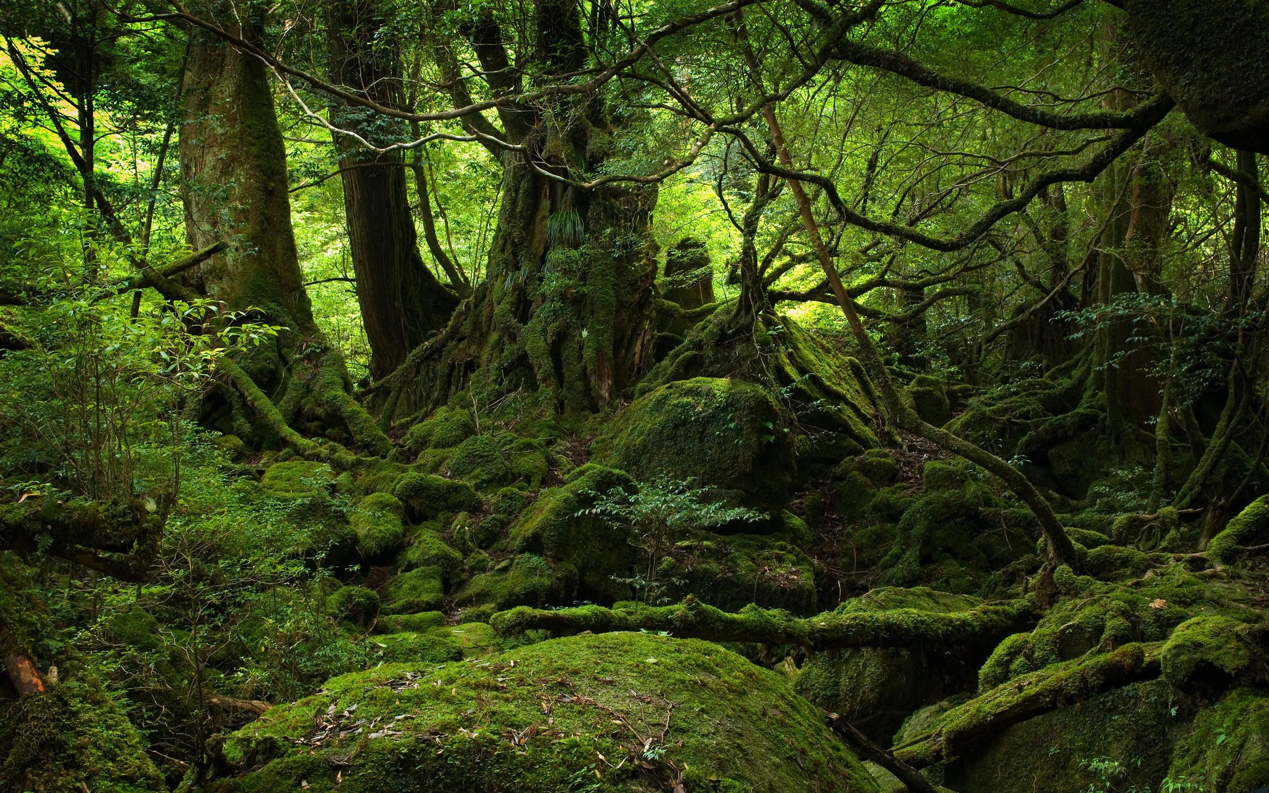 twilight forest wallpaper hd