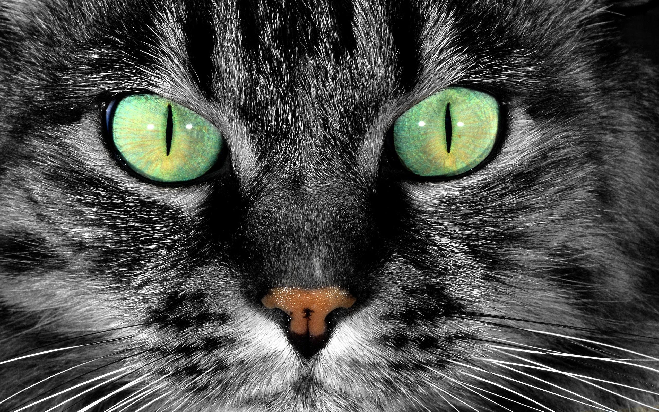 wallpaper cat eyes